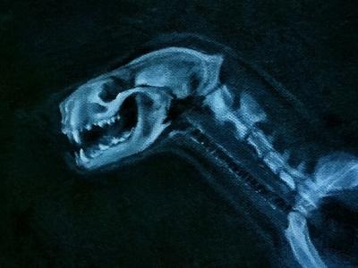 American Mink X-ray
