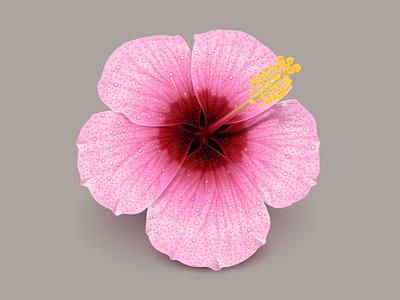 Mac OS icon icon mac os icon flower hibiscus hawaii pink pink flower red flower hibiscus flower