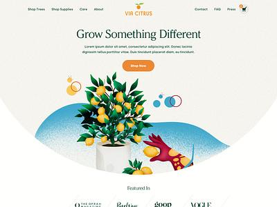 Via Citrus Website illustration shopify website web ux ui design
