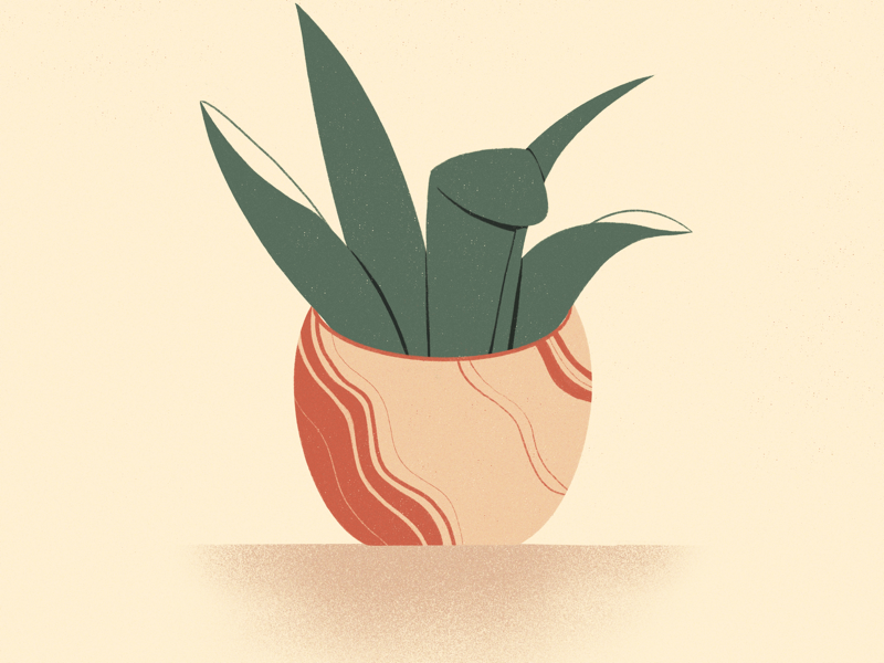 potted babe plants graphic design graphic illustration procreate