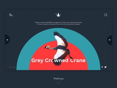 Grey Crowned Crane Page