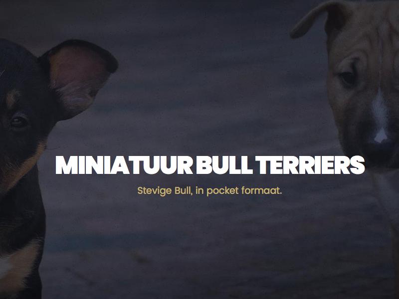 Miniature Bull Terrier Website wordpress breeder landingpage ui website minibull