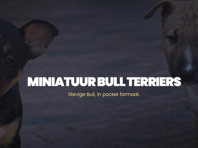 Miniature Bull Terrier Website wordpress breeder landingpage ui website minibull