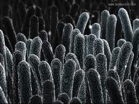 Electron Microscope Bacteria Shot02