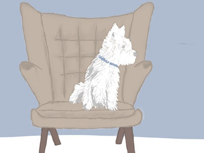 Westie on chair dribbble
