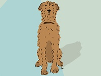 Irish Terrier illustration