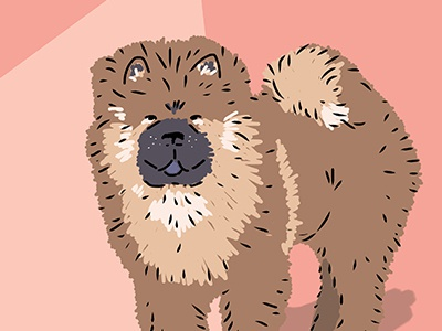 Chow chow dribbble