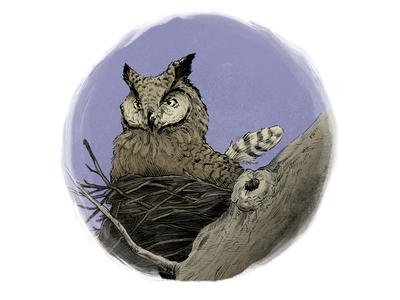 Great Horned Owl (Mother on Nest)