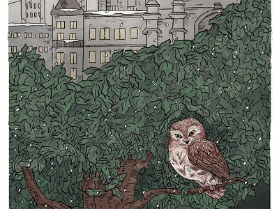 Saw-whet Owl in Central Park (detail) ink hand drawn digital procreate illustrators ny nyc new york city birding birds owl drawing illustration pen and ink