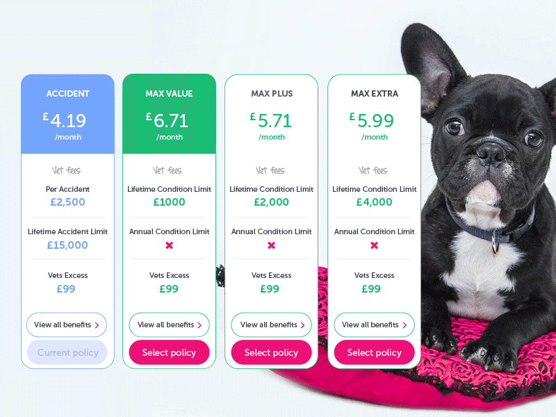 Policy table experiment dailyui dailyuichallenge compare price pricing uidesign ui interface clean pet table pricingtable