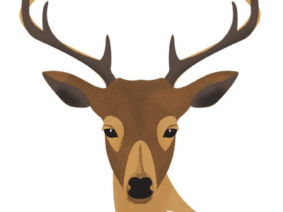 Deer deer nature illustration
