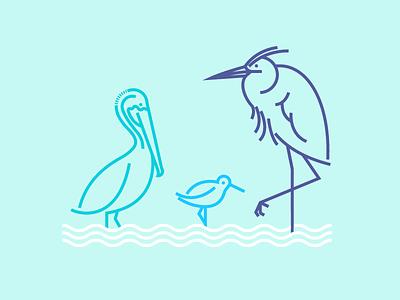 Shore Birds pelicans sandpipers herons