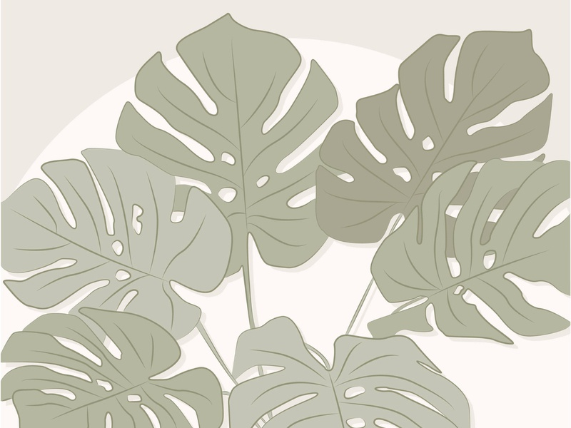 monstera flat illustration simple minimal tropical illustrator illustration plant illustration plants plant monstera