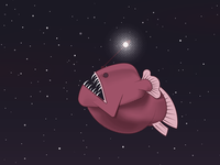 Night - Anglerfish