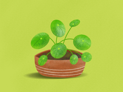 New year, new plant 🌱 Pilea Peperomioides drawing nature growth terracotta pilea green houseplants potted plant houseplant plant procreateapp procreate hand drawn illustration art illustration design