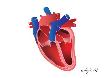 humanheart heartbloodvessels heart logo heartanatomy heart humanheart bestdesign venkatesh design illustration