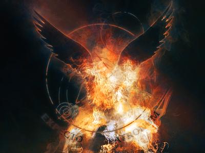 Expecto Patronum - Phoenix phoenix poster magic expecto patronum harrypotter
