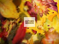 Autumn Background #2