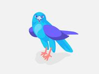 Meet Falcon