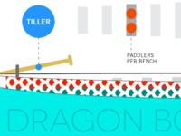 Dragon boat basics