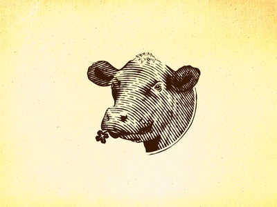 angus cow design scratchboard etching cow vector hand drawn old school vintage illustration