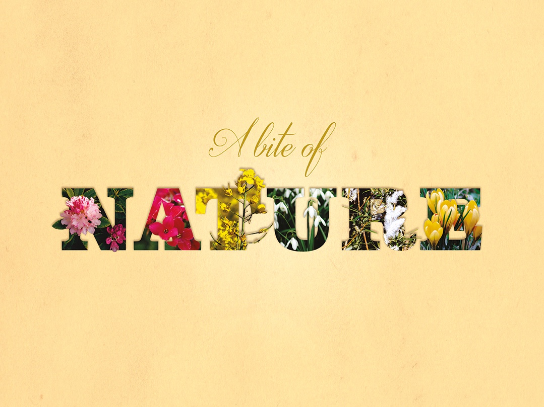 A Bite of Nature poster design photo art art typography flowers photograhy poster art poster graphic  design design
