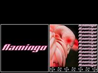 flamingo [ bird collection 5/7 ]