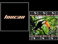 toucan [ bird collection 7/7 ] END