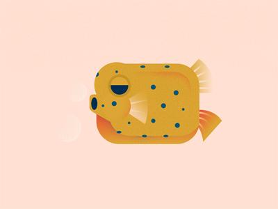 Beautiful Things I've Seen - Box Fish