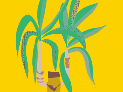Yucca illustration
