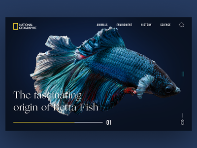 National Geographic Web Site Redesign betta fish fish geography national geographic ui uidesign graphic design design ux minimal art app