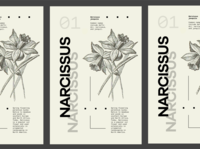 Flower Series - Narcissus