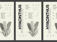 Flower Series - Hyacinthus