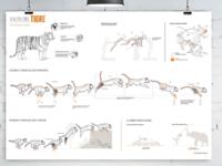 Infographic-tiger motion