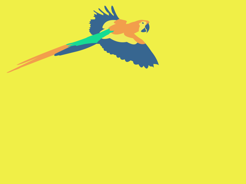 Parrot design characters 2d animals animal illustrator yellow parrots parrot illustration visual color colors sketch