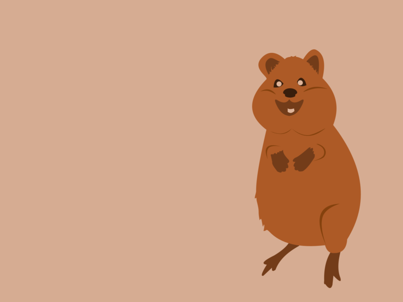 Quokka australia rodent quokka design dutch illustrator illustrator illustration nature gray geen thee wildlife water cute minimal design minimal mammal 2d vector animals animal