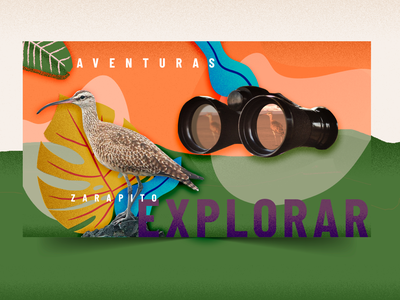 Ala Aventura birds brandingtv motiontv tv collage motion graphics animation illustration graphic design design branding brand