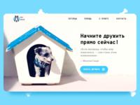 Animal Shelter Website concept