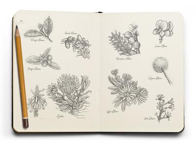 Travelogue Sketches