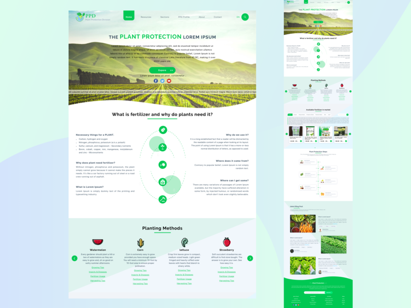 PPD website web design ui