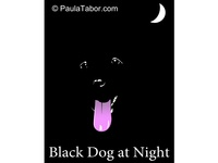 Black Dog At Night
