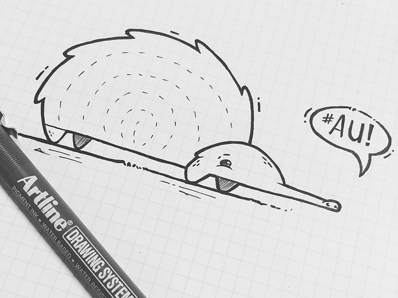 Echidna paper pen illustration echidna
