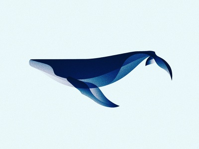 Humpback Whale blue whale animal ocean fauna illustration illustrator vector