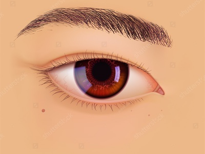 Vector eye of Asian make-up vision correction eyesight eyebrow realistic closeup korean chinese japanese asian eye vector