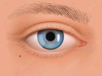 Vector eye of White makeup vision correction surgery cosmetics eyesight look ophthalmology iris realistic vector eye