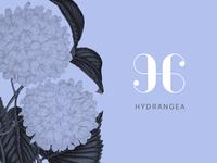 Hydrangea - final review