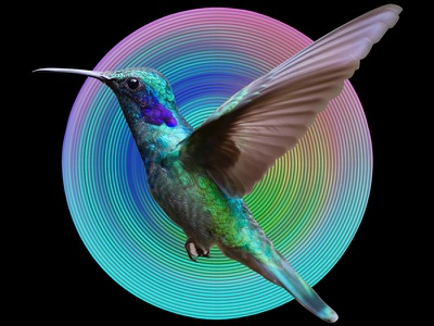 RADIAL HUMMINGBIRD wings green color waves circular disc bird concentric radial illustration design graphic  design action photoshop action photoshop actions