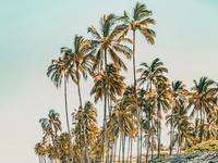 Island Life III
