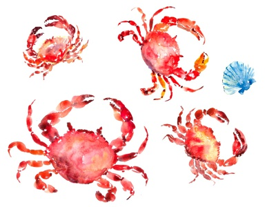 Crabs watercolour illustration bt Tanya Amos food watercolour seafood sea marine isolated animal watercolor water crustacean white wildlife dinner shellfish sealife underwater painting watercolor painting nutrition hand draw