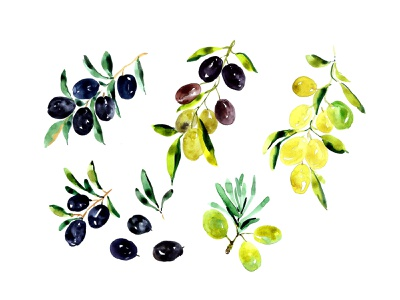 Olives watercolour illustration brazil forest sketch fresh background food natural art drawing branch isolated fruit leaf tree summer illustration watercolor green watercolour olive